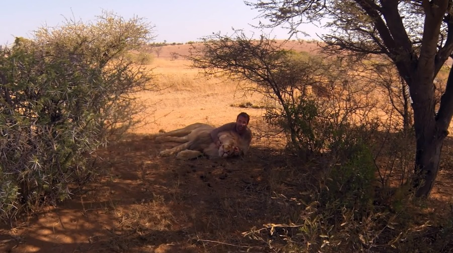 Der Löwenflüsterer in kuscheliger Mission