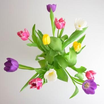Frühlingsfreu(n)de Tulpen